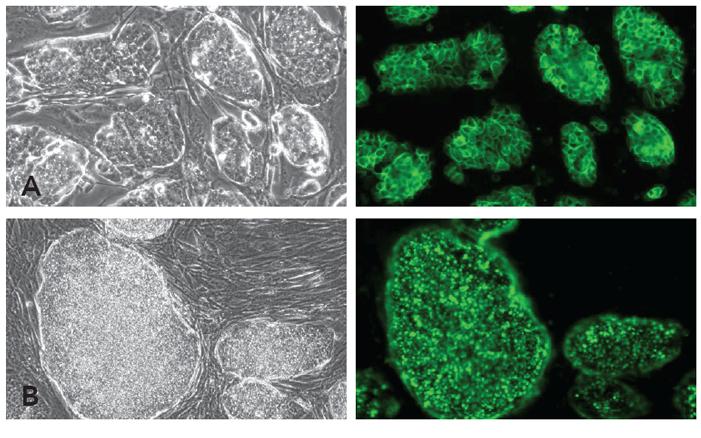 BioLite Antibodies Sample Data